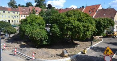 Zdjęcie: Rynek w czasie remontu (drzewa, płyta główna)